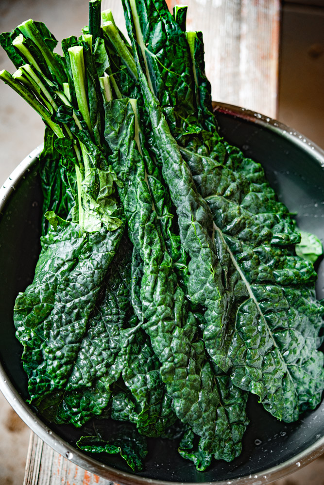 lacinato (tuscan or dinosaur) kale washed in bowl